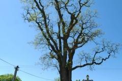 Zabrdi pamatny strom